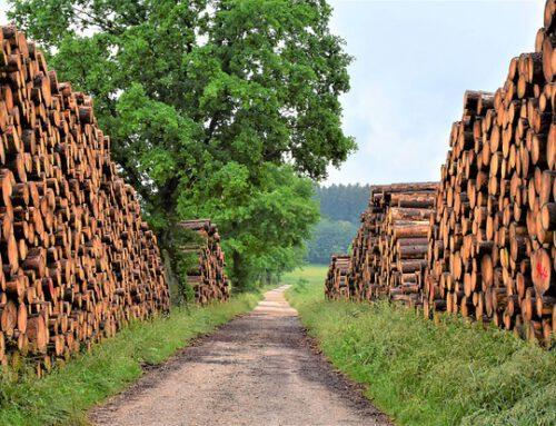 Holzkrise 2021