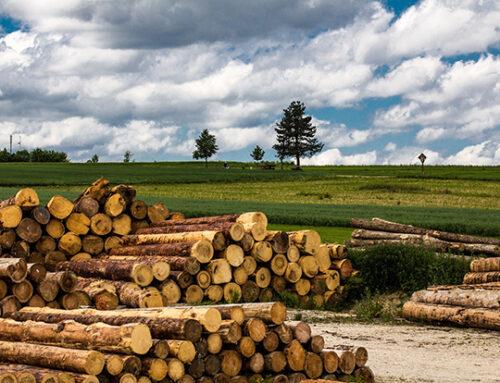 Holzkrise 2021 – Update 06/2021